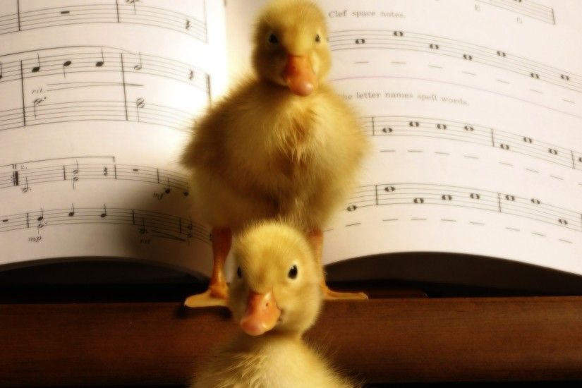 Birds animals ducks duckling musical musical notes baby birds wallpaper |  2560x1600 | 236569 | WallpaperUP
