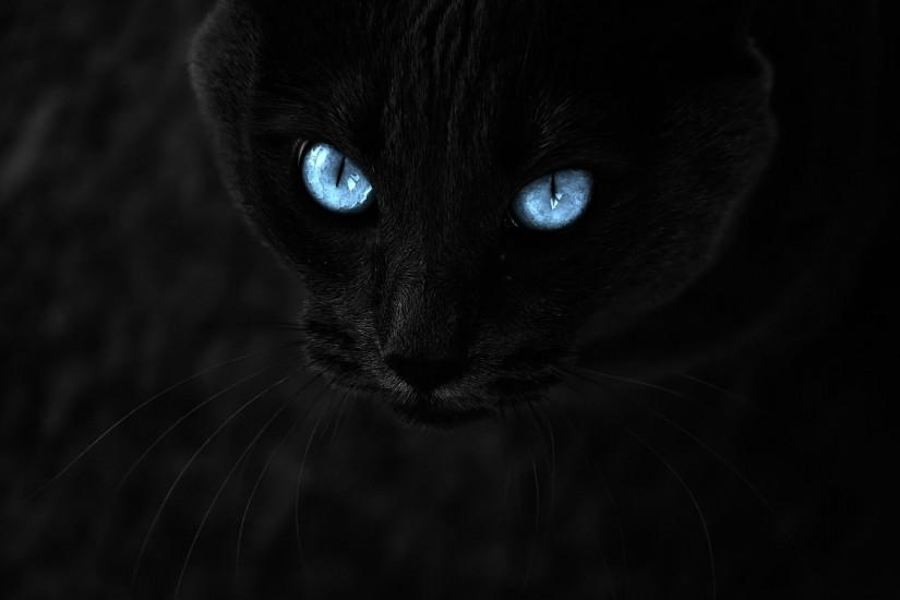 Image - Black-cat-with-blue-eyesanimals-black-cat-blue-eyes-all-wallpapers-afyph24s.jpg  | The Warrior Cats Roleplay and Fanfiction Wiki | Fandom powered by ...