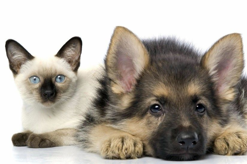 Baby Cat And Dog | Wallpaper pics