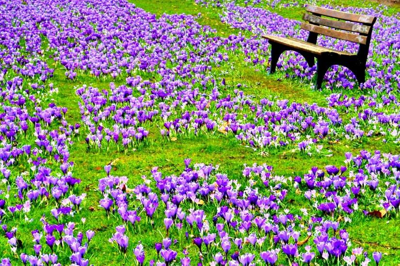 amazing spring flowers wallpaper 2560x1600