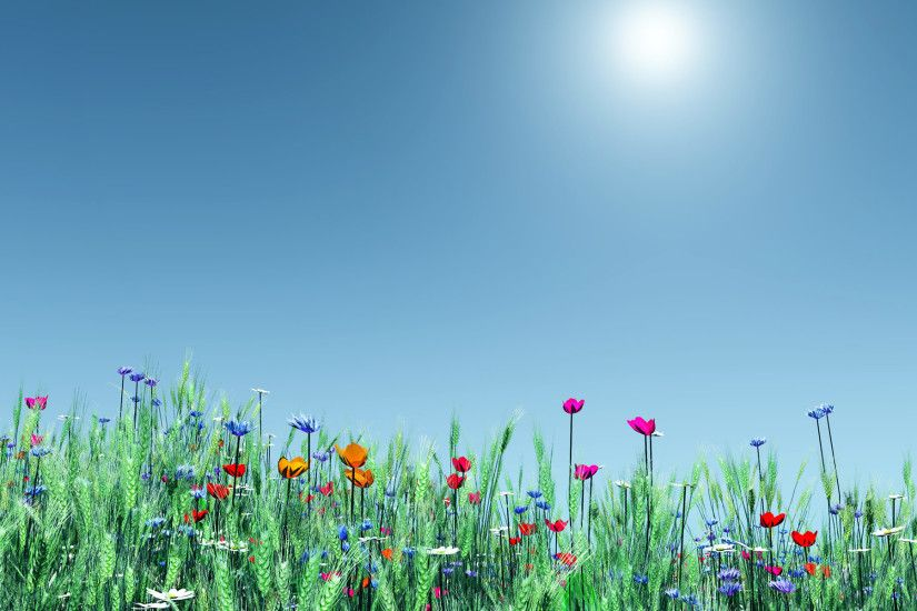 Spring Flowers background Widescreen new.
