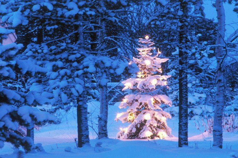 free christmas tree desktop wallpaper ; christmas-tree-snow-outdoor-hd-