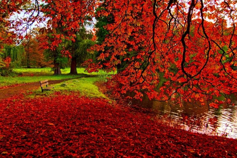 Photography - Park Fall Tree Foliage Red Pond Bench Wallpaper