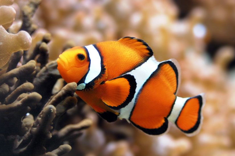 best collection of clownfish