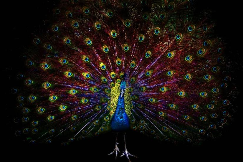 Peacock Wallpapers - Full HD wallpaper search