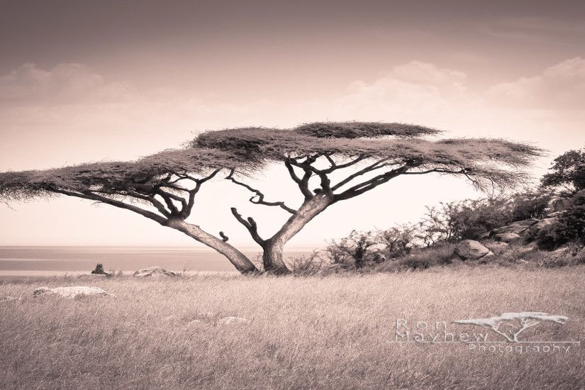 Image Gallery serengeti wallpaper