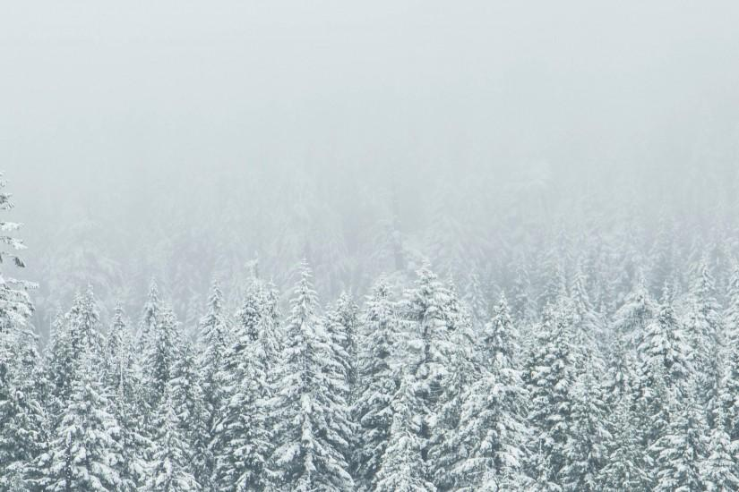 Snow-Covered Trees 21:9 Wallpaper | Ultrawide Monitor 21:9 Wallpapers