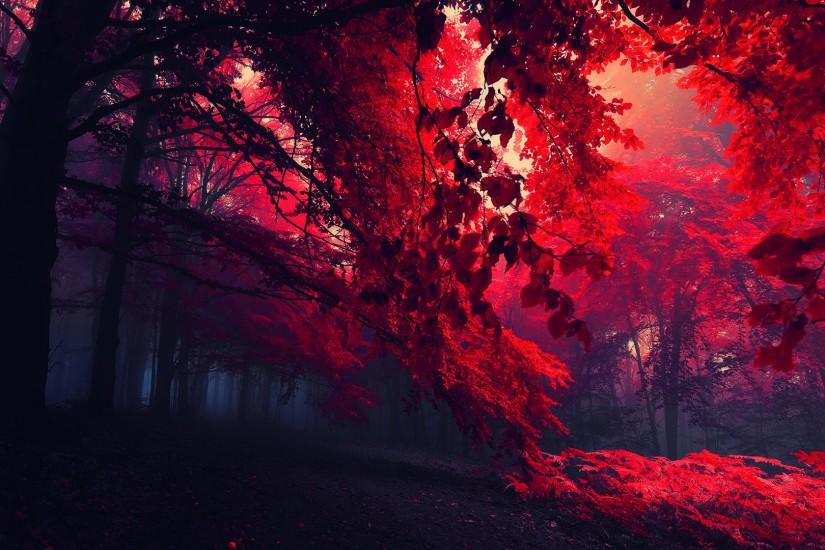 HD Red Fall Leaves Wallpaper in Nature. Download this Red Fall Leaves HD  Wallpaper and