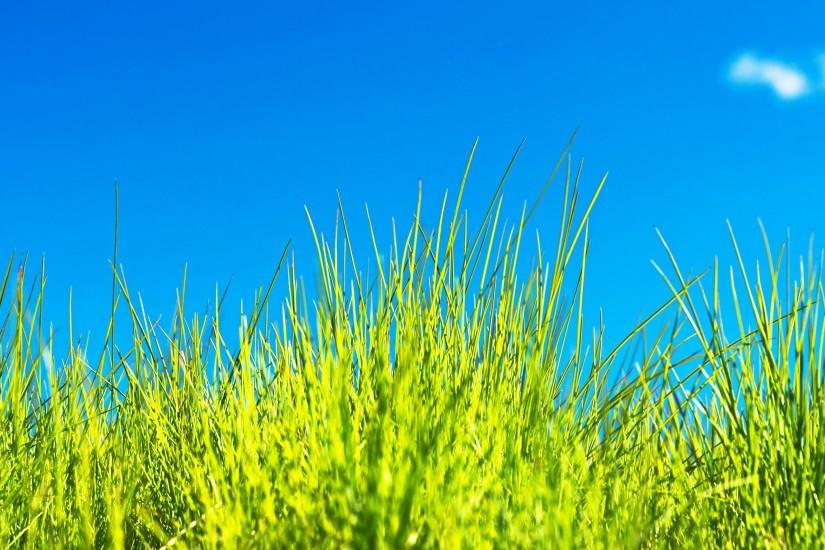 grass wallpaper 2560x1600 for iphone 5s