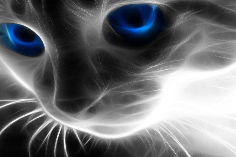 Cool Effected Cat Wallpaper Wallpaper HD