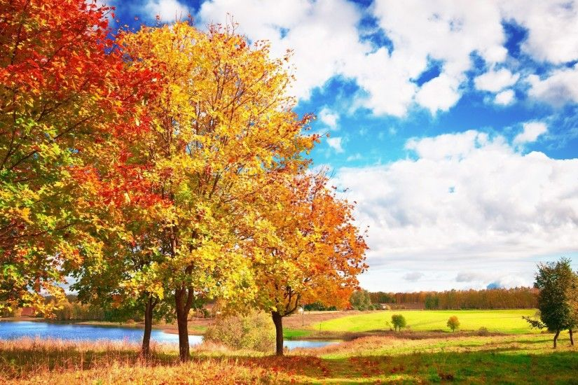 2560x1440 Wallpaper autumn, trees, colors, palette, bright, leaf fall