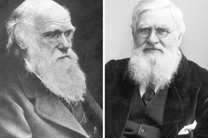 Darwin & Wallace. Two British Scientists who discovered Evolution through  Natural Selection independently.