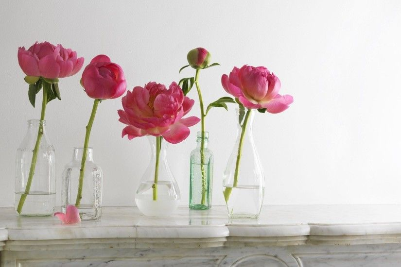 ... Peonies in the vase HD Wallpaper 1920x1200