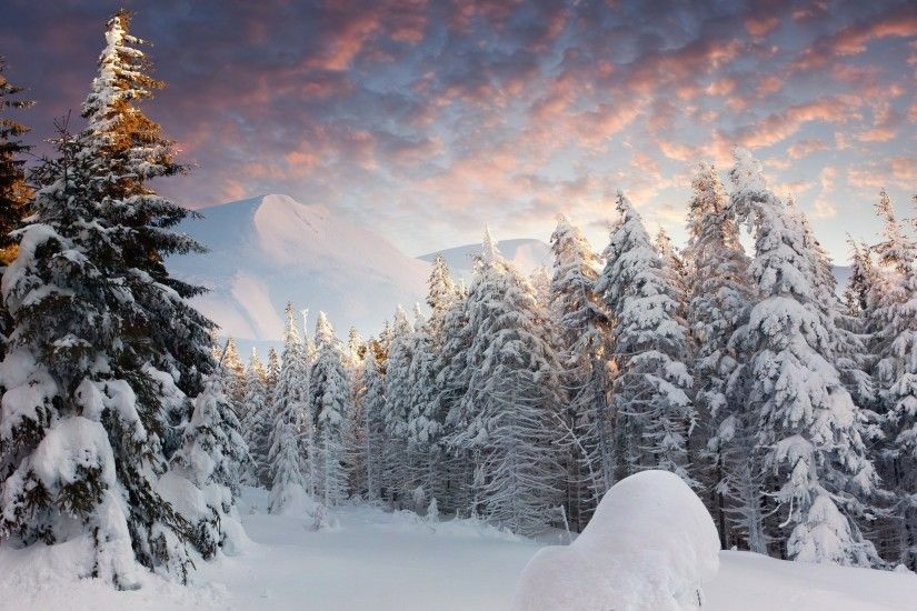 Landscape Nature Snow Forest Wallpapers Hd Desktop And Mobile