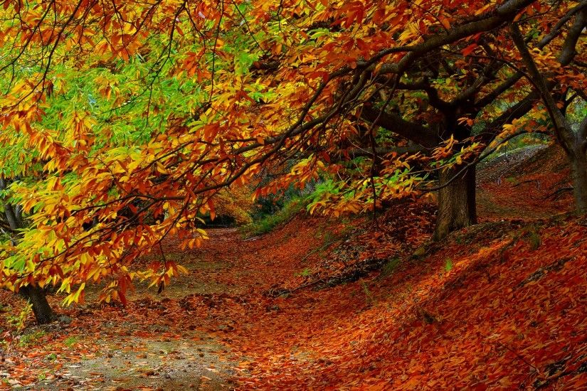 Preview wallpaper forest, autumn, foliage, trees 3840x2160