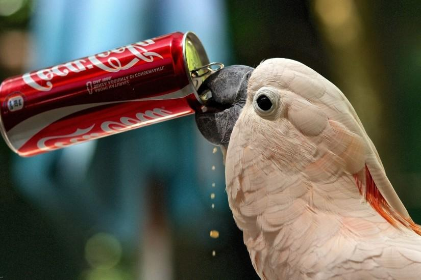 parrot drink Coca-Cola Wallpaper HD