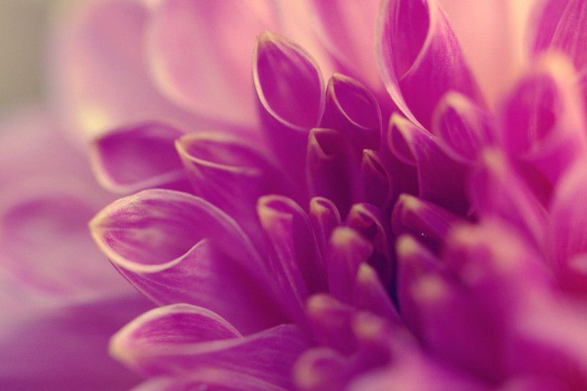 Purple Flower Background For Download