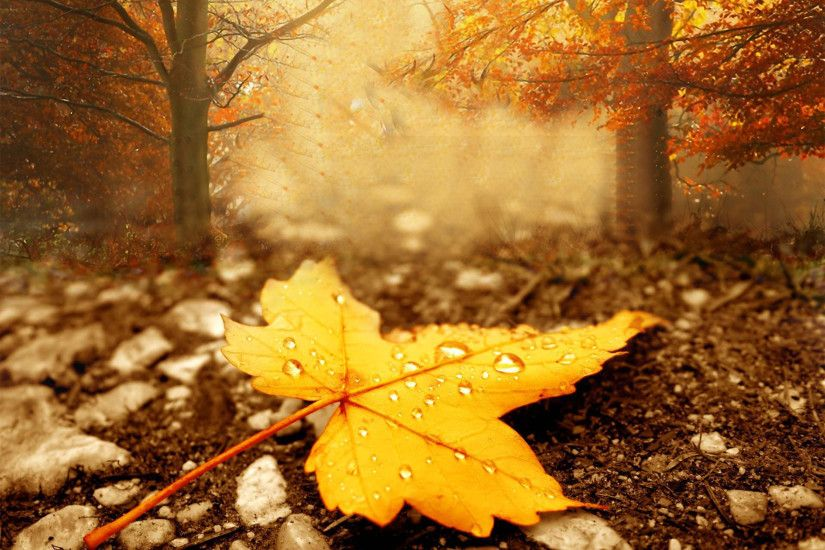... Download V.16 - Season Autumn, Wall.Web; Magnificent Season Autumn  Wallpaper ...