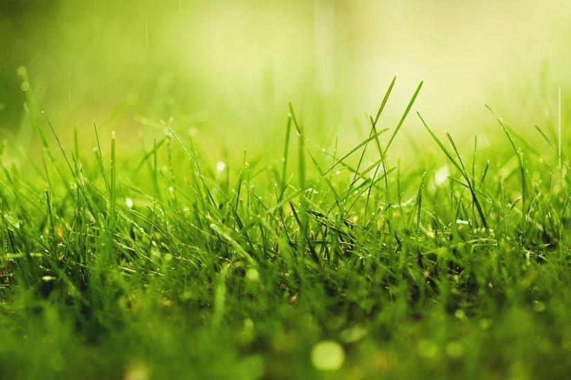 new grass wallpaper 1920x1200