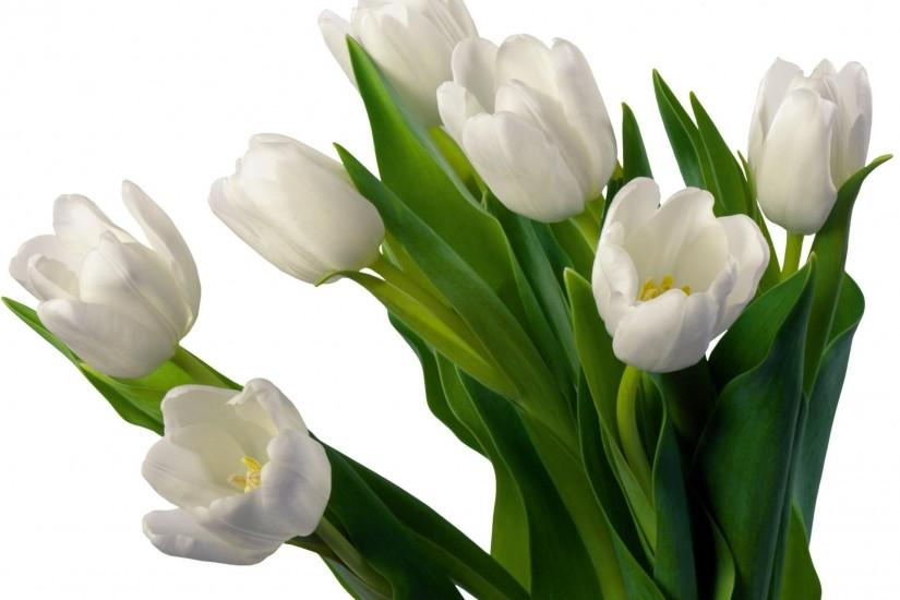 1920x1480 Wallpaper tulips, flowers, flowerbed, flower, white background