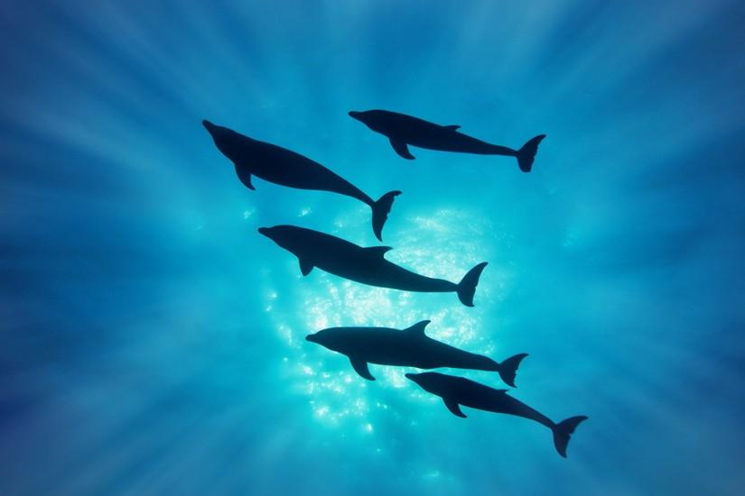 Animal - Dolphin Wallpaper