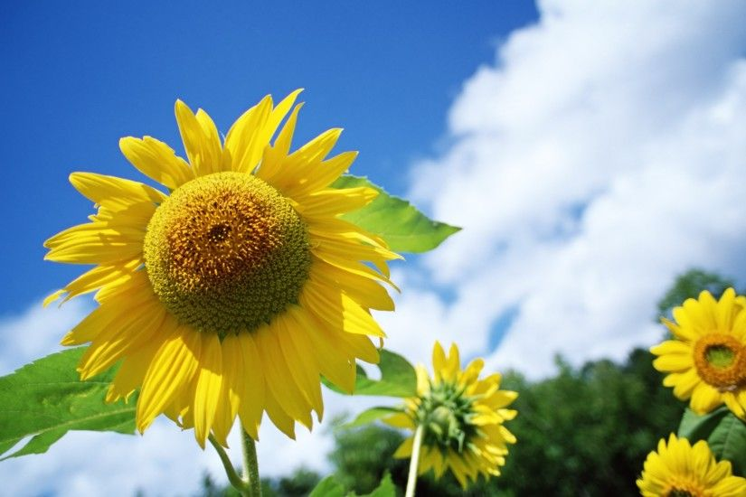Brands Celebrate ControversyFree News Event gizmodocom · sunflower desktop  wallpaper sunny sky - photo #6. httpswwwgooglecommapsdircurrentlocation