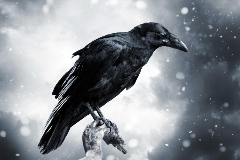 ... 58 Crow HD Wallpapers | Backgrounds - Wallpaper Abyss - Page 2 ...