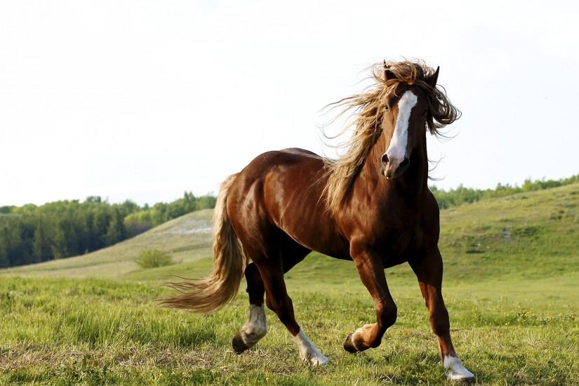 0 Horse Wallpapers Best Wallpapers Horse Wallpapers HD Wallpapers