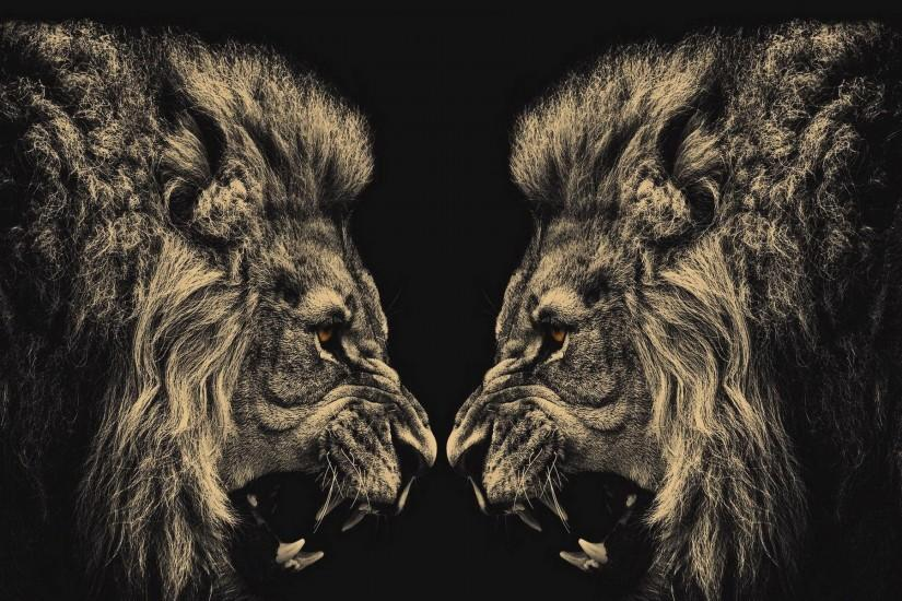 new lion background 1920x1200 pictures