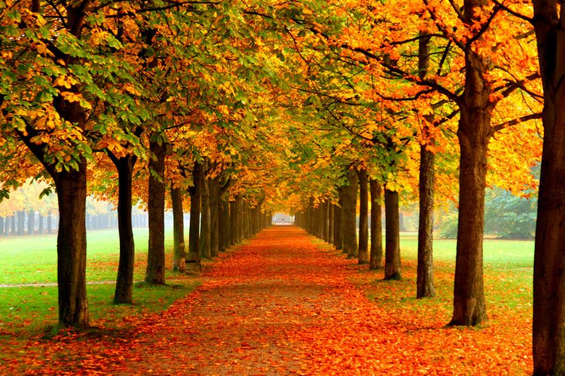 free wallpaper fall wallpapersafari