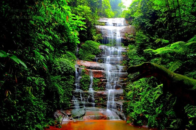 forest waterfall wallpaper 34054