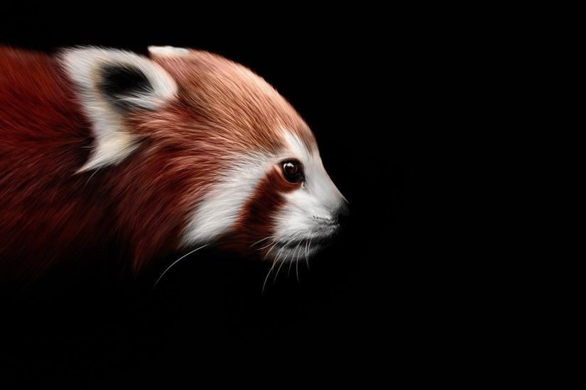 Red panda on a black background