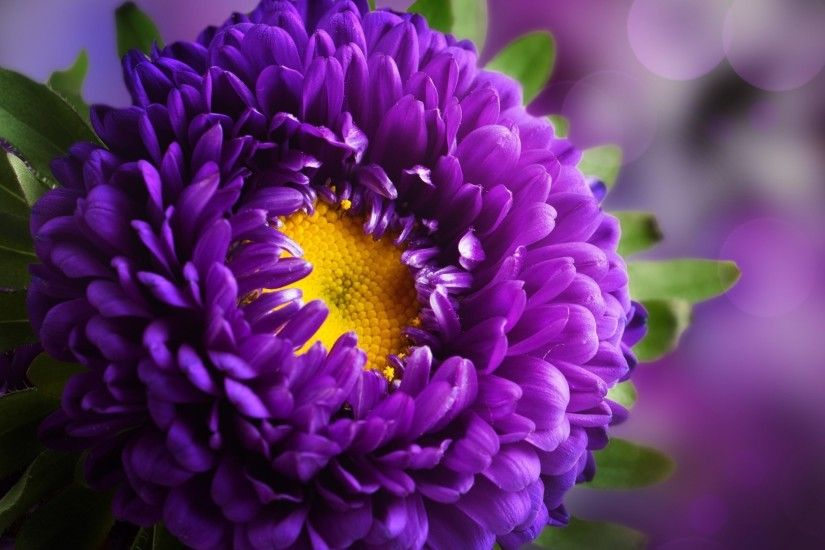 Purple Flower Photography Wallpaper free download in high quality  widescreen resolutions. We have top collection