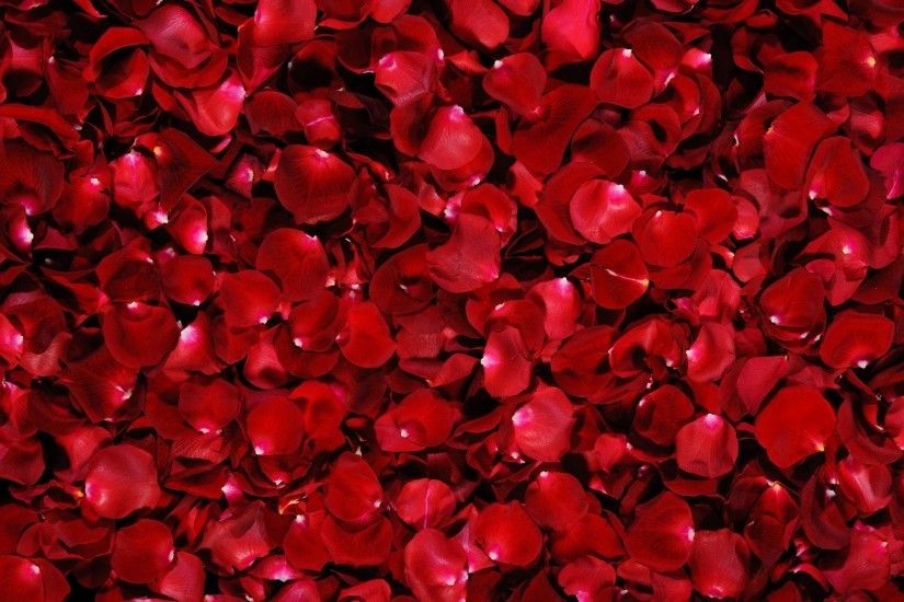 Wallpapers For > Red Roses Background Tumblr