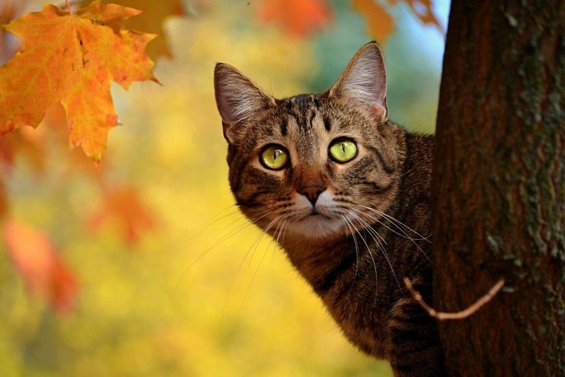 Autumn Animal Wallpaper - WallpaperSafari ...
