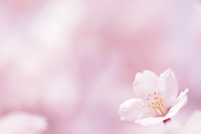Pink Flowers Background 183 ①
