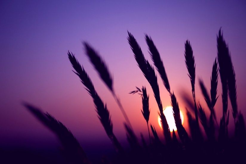 ... purple-sunset-wallpapers-hd ...