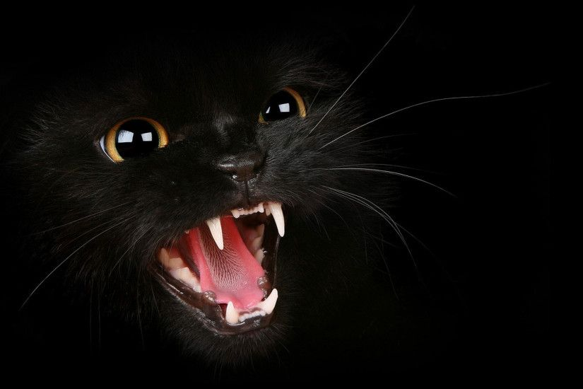 hd pics photos angry black cat hd quality desktop background wallpaper