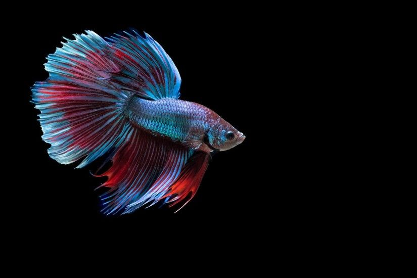 ... Wallpaper Gallery · iPhone Fish Backgrounds Collection ...