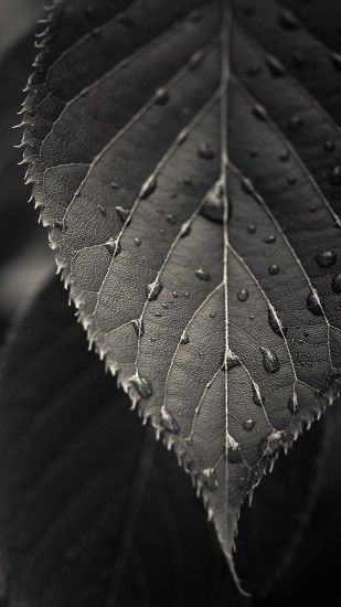 Nature iPhone 6 Plus Wallpapers - Black And White Close-up Leaf Dew Drops  iPhone 6 Plus HD Wallpaper