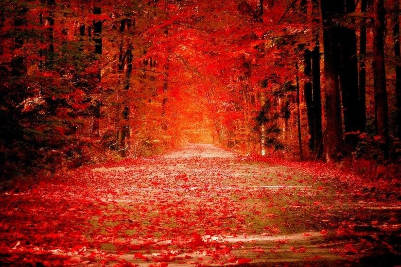 Trees Forest Season Color Landscape Fall Autumn Nature Tree HD Wallpapers  Free