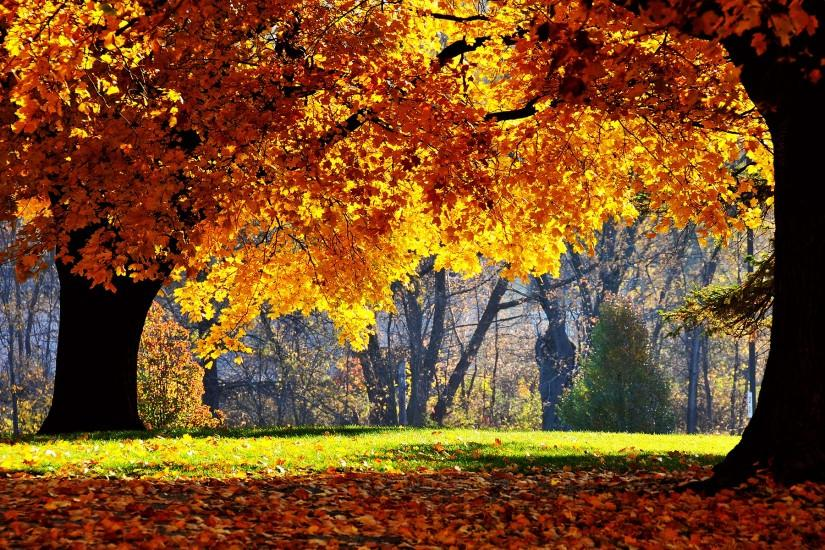 free autumn background 1920x1200