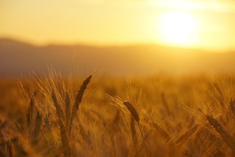 field sunrise sunset warm wallpaper | 1920x1200 | 104237 | WallpaperUP .