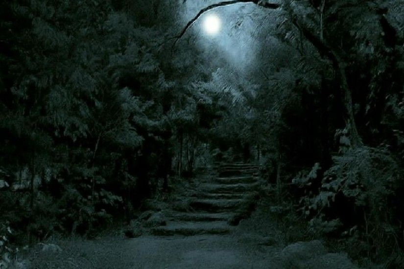 Dark Forest Wallpapers Wallpaper 1920×1080 Dark Forest Wallpaper (42  Wallpapers) | Adorable