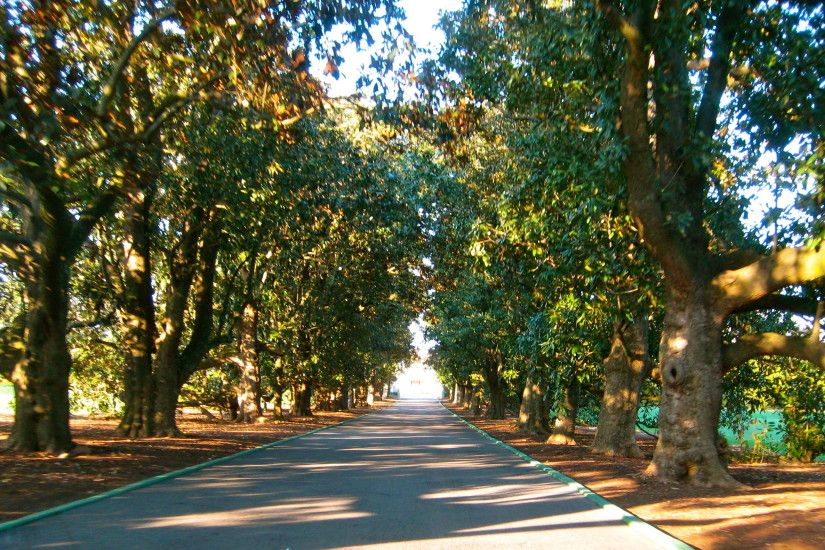Magnolia Lane at Augusta National Golf Club, Augusta, GA #TheMasters  #MagnoliaLane #