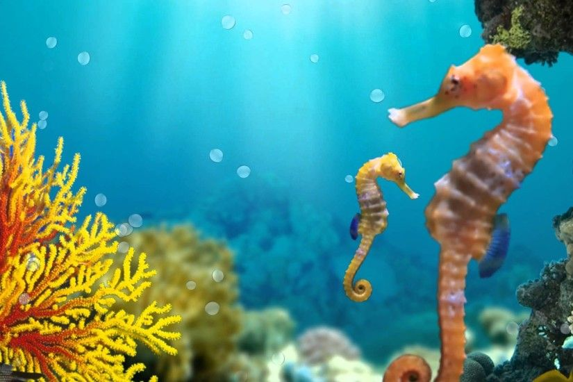 Seahorses - animated