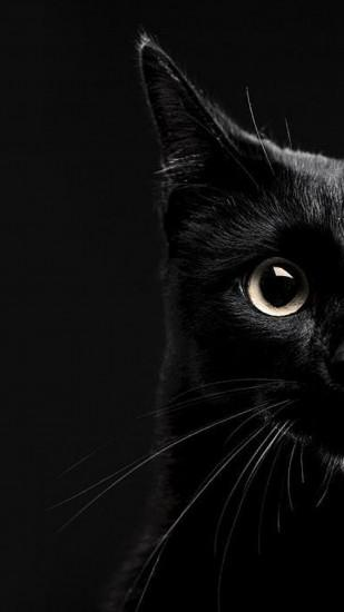 Black Cat Wallpaper Download Free Cool Full Hd Backgrounds For