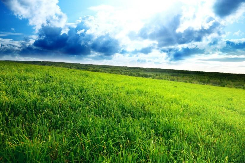 full size grass wallpaper 2560x1600 for android tablet