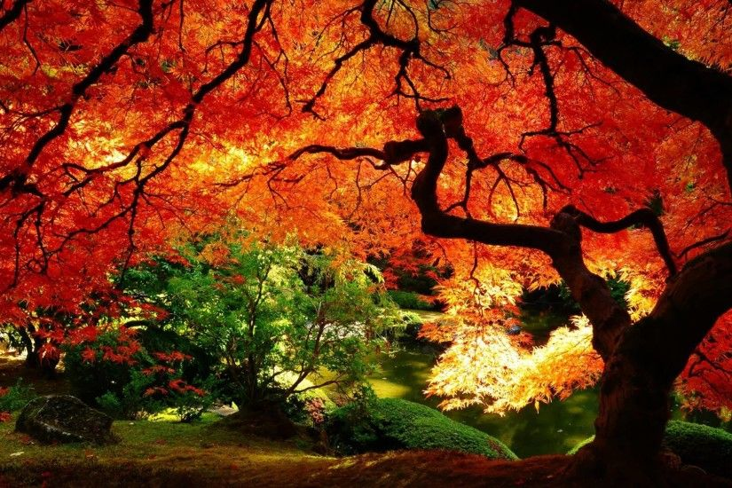 Images For > Fall Landscape Wallpaper