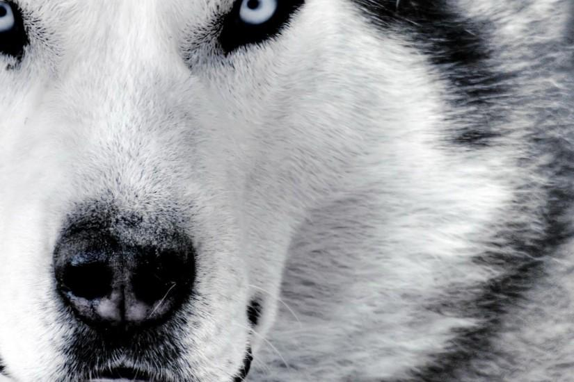 Wallpaper Hd Wolf Background 1 HD Wallpapers | Hdwalljoy.